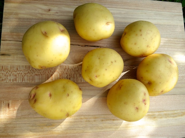 Yukon Gold Potatoes for Eggy Potato Salad