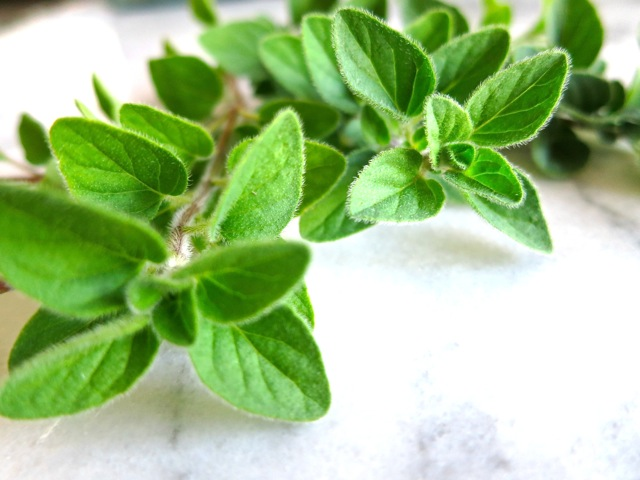 Fresh Oregano Sprig
