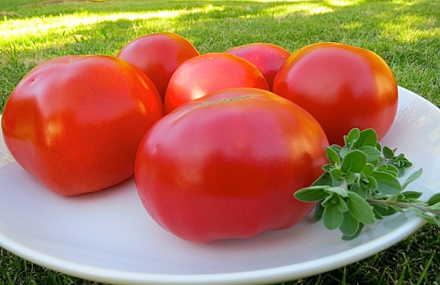 Vine Ripened Big Beef Tomatoes from the Garden