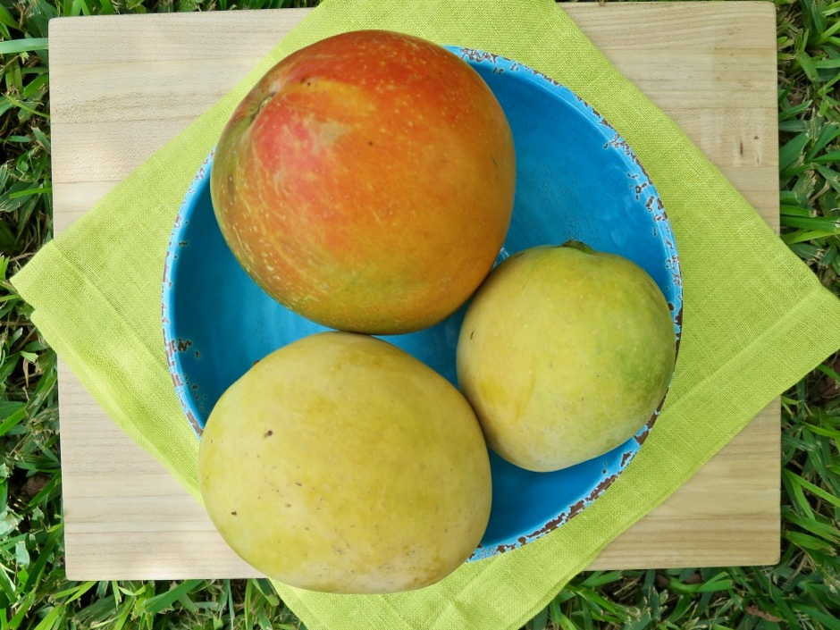 Pirie and Rapoza Mangos